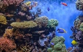 fondali, Coralli, pesce, panorama, paesaggio marino