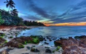 Aguadilla, Portorico, tramonto, mare, puntellare, Palme, paesaggio