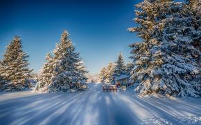 зима, снег, деревья, ели