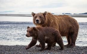 Katmai National Park, Alaska, медведи