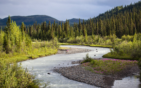Sanctuary River, Denali National Park, река, деревья, пейзаж