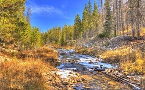 foresta, fiume, alberi, Bacino, Montana, paesaggio