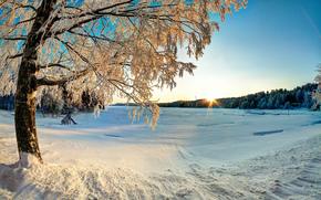 tramonto, inverno, derive, alberi, paesaggio