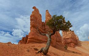 Tree, Bryce Canyon National Park, скалы, дерево, пейзаж