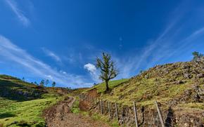 Albero e strada, Guatemala, Colline, alberi, paesaggio