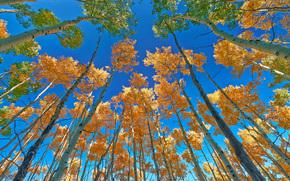 осень, деревья, кроны, верхушки, небо, природа