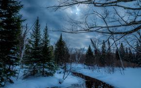 zima, las, rzeka, zachód słońca, drzew, krajobraz