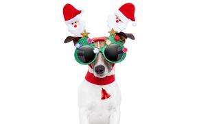 собака, Новый год, маскарад, ободок, Санта Клаус, темные очки, Ёлочки, блестящие, колокольчик, красный, белый фон, праздник, юмор, животные
