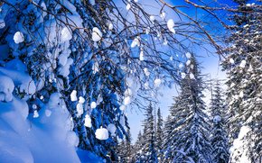 Snow in Russia, winter, forest, trees, snow, landscape
