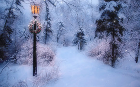 winter, forest, snow, trees, road, lantern, landscape