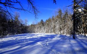 inverno, nevicata, foresta, alberi, paesaggio