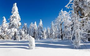 冬天, 树, 漂移, 雪, 景观
