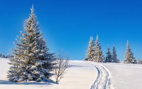 zima, śnieg, zaspy, drzew, krajobraz, ślady