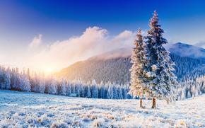 puesta del sol, Montañas, bosque, árboles, helada, campo, paisaje