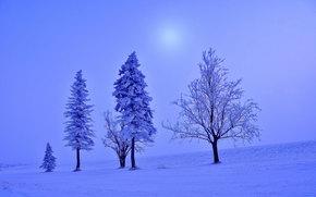 зима, закат, поле, деревья, пейзаж
