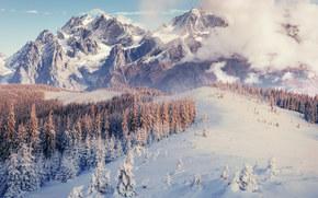 inverno, Montagne, alberi, paesaggio