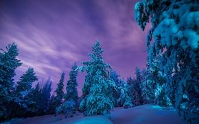 Laponie, Finlande, Laponie, Finlande, hiver, neige, dérives, forêt, arbres