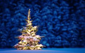 Albero di Natale, Capodanno, Sfondi di Natale