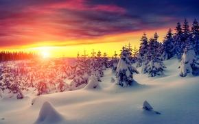冬天, 日落, 雪, 树, 云杉, 漂移, 景观