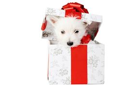 perro, cachorro, blanco, caja, regalo, arco, rojo, Año Nuevo, fiesta, fondo blanco, animales