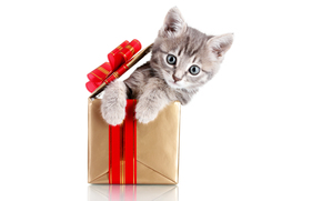 cat, kitten, Gray, box, gift, sitting, bow, red, white background, holiday, New Year, animals