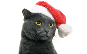 cat, COTE, Gray, DARK, yellow eyes, cap, santa, red, New Year, holiday, white background, animals