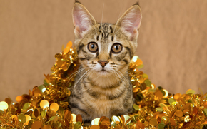 cat, COTE, Gray, striped, tinsel, Gold, gold, gilding, beige background, holiday, New Year, animals