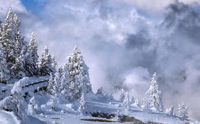 Yellowstone-National-Park, winter, trees, snow, bridge, landscape