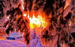 inverno, tramonto, rami di alberi, paesaggio