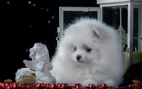 spitz, dog, figurine, angel, chaplet