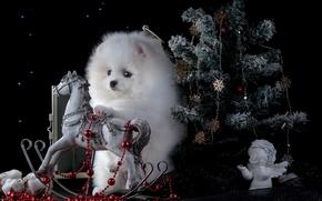 New Year, spitz, dog, fir-tree, horse, rocker, figurine, angel, chaplet