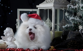 Ano Novo, spitz, cão, boné, abeto, estatueta, anjo, grinalda