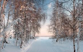 zima, droga, drzew, krajobraz