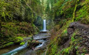 Columbia River Gorge, Wiesendanger Falls, forest, Rocks, waterfall, nature