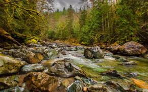 река, течение, камни, лес, деревья, природа