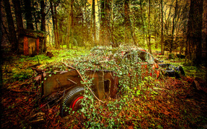forest, trees, abandoned car