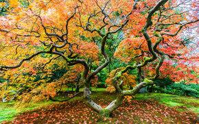 Seattle Japanese Garden, осень.дерево, природа