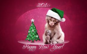 Capodanno, 2016, vacanza, scimmia