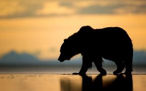Alaska, bear, Bruin, silhouette, sunset