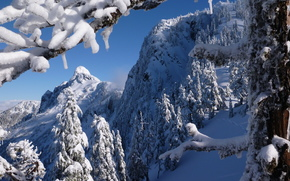 North Shore Mountains, British Columbia, Canada, North Shore Mountains, British Columbia, Canada, winter, Mountains, trees