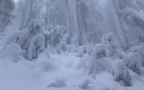 Vancouver, British Columbia, Canada, Vancouver, British Columbia, Canada, forest, winter, snow, drifts