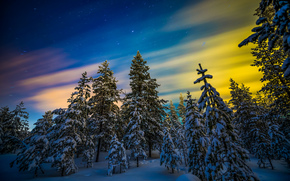Lapland, Finland, Lapland, Finland, winter, snow, forest, trees, northern lights