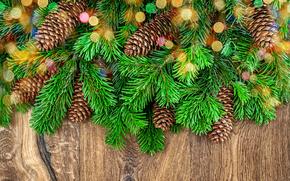 Sfondi di Natale, ramo di un albero, Coni, sfondo