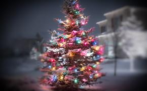 Christmas tree, novogdnie Wallpaper, Garlands