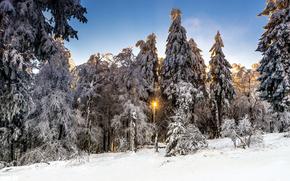 puesta del sol, invierno, bosque, árboles, paisaje