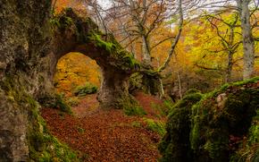 осень, лес, деревья, скала, арка, природа