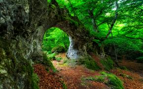 forêt, arbres, roche, arc, nature