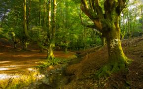 лес, деревья, речка, природа, Otzarreta