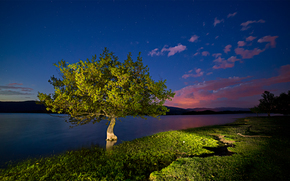 sunset, lake, tree, landscape
