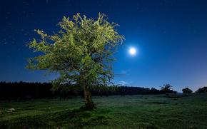 noite, campo, árvore, paisagem